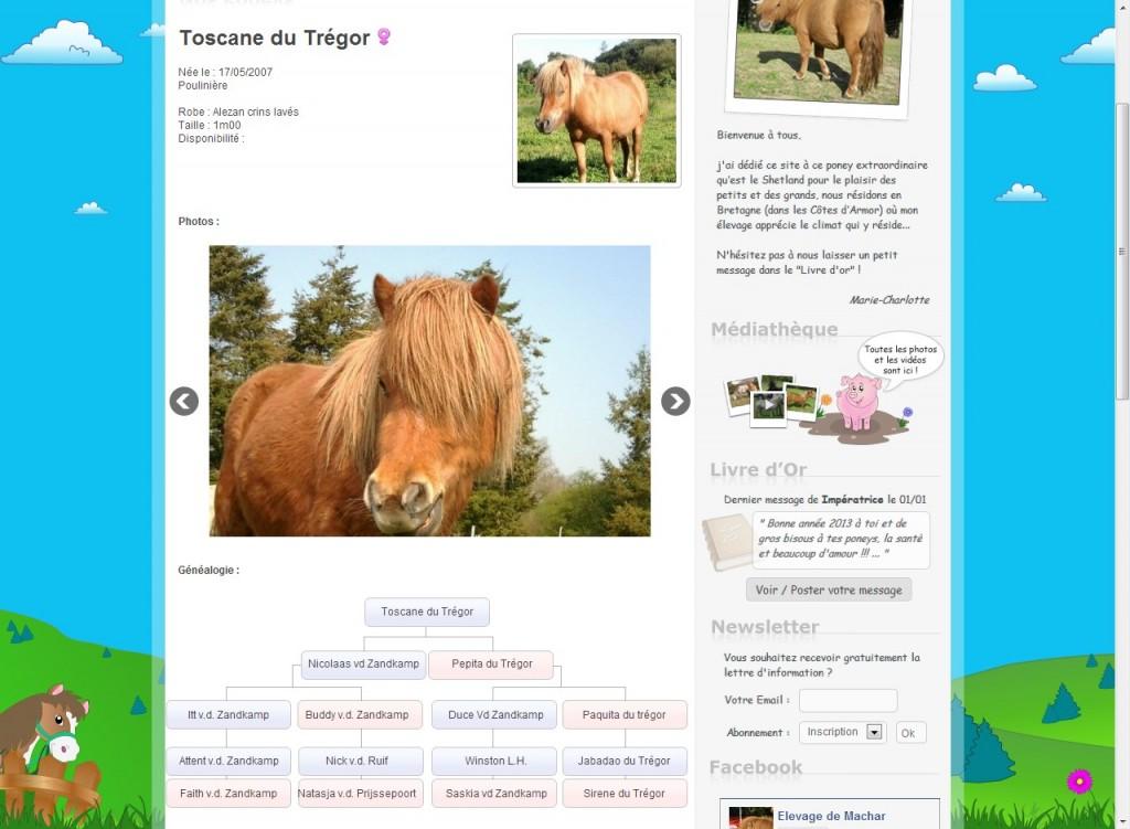 4730b-32623-2013-10-29_detail-nos-poneys.jpg